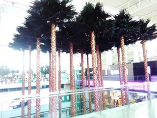 Деревья растут прямо в здании аэропорта Гуанчжоу
